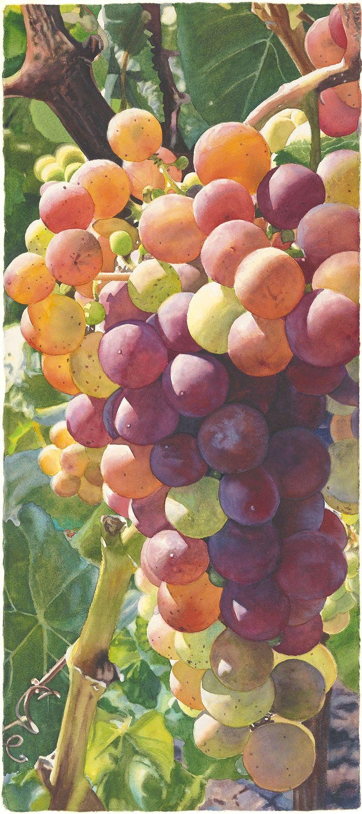 145 Best Grapes Images On Pinterest | Paintings, Wines And Wine Art Intended For Grape Colour Wall Art (Image 4 of 20)