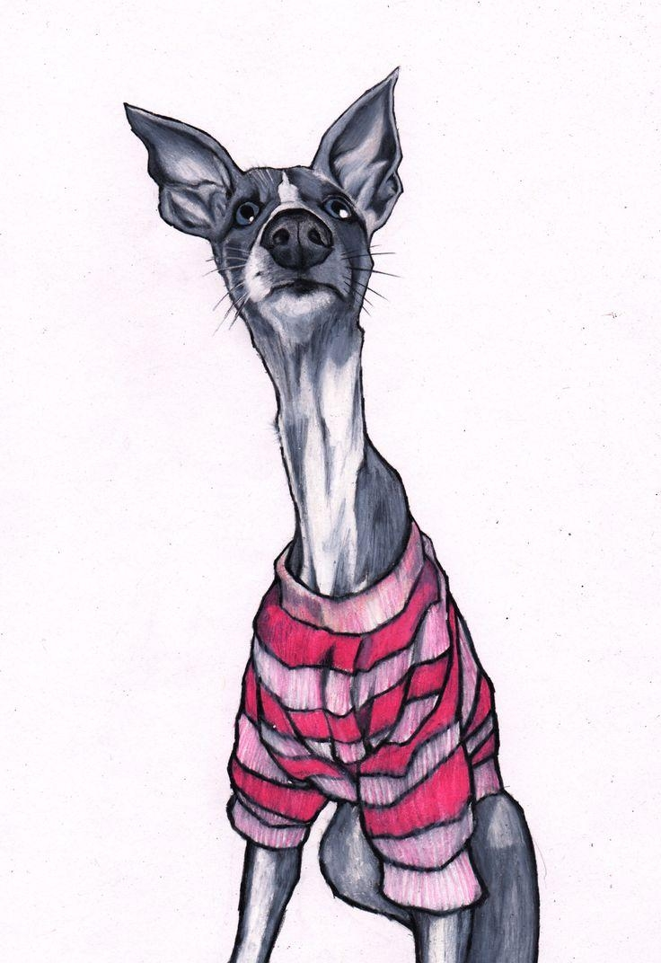 33 Best Whippet Images On Pinterest | Italian Greyhound, Greyhound Intended For Italian Greyhound Wall Art (Image 4 of 20)