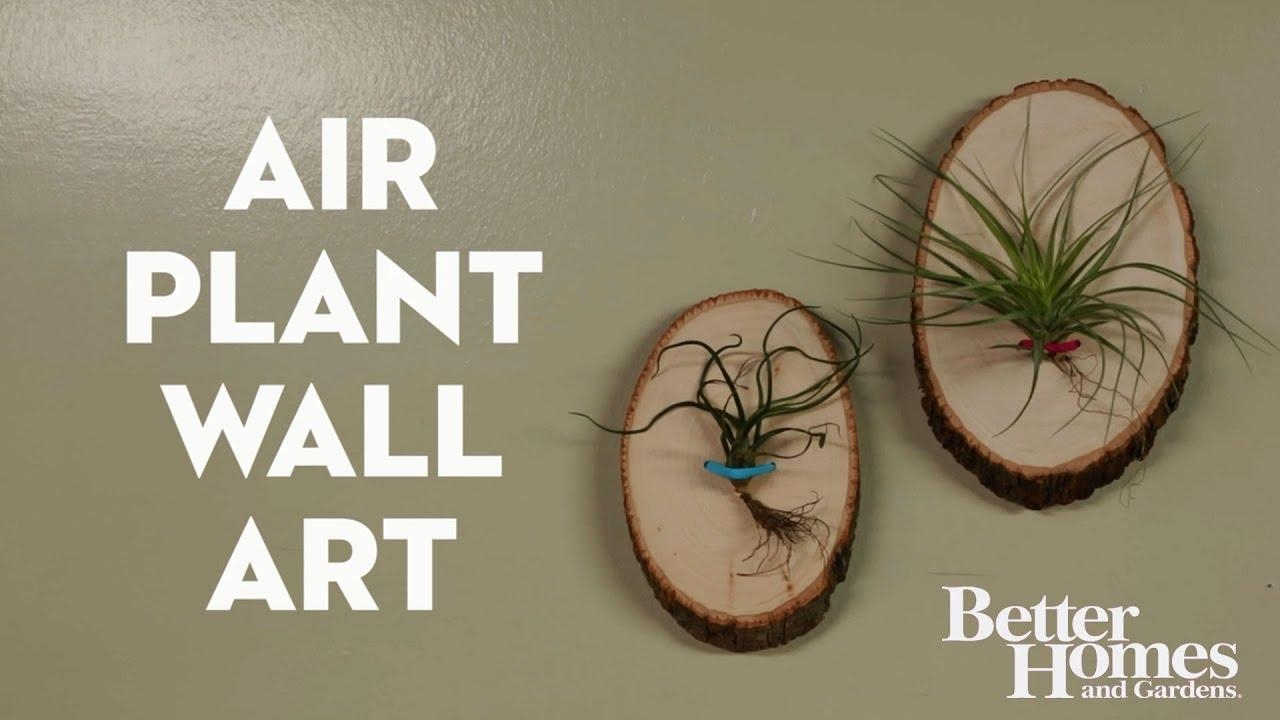 Air Plant Wall Art – Youtube With Air Plant Wall Art (Image 2 of 20)
