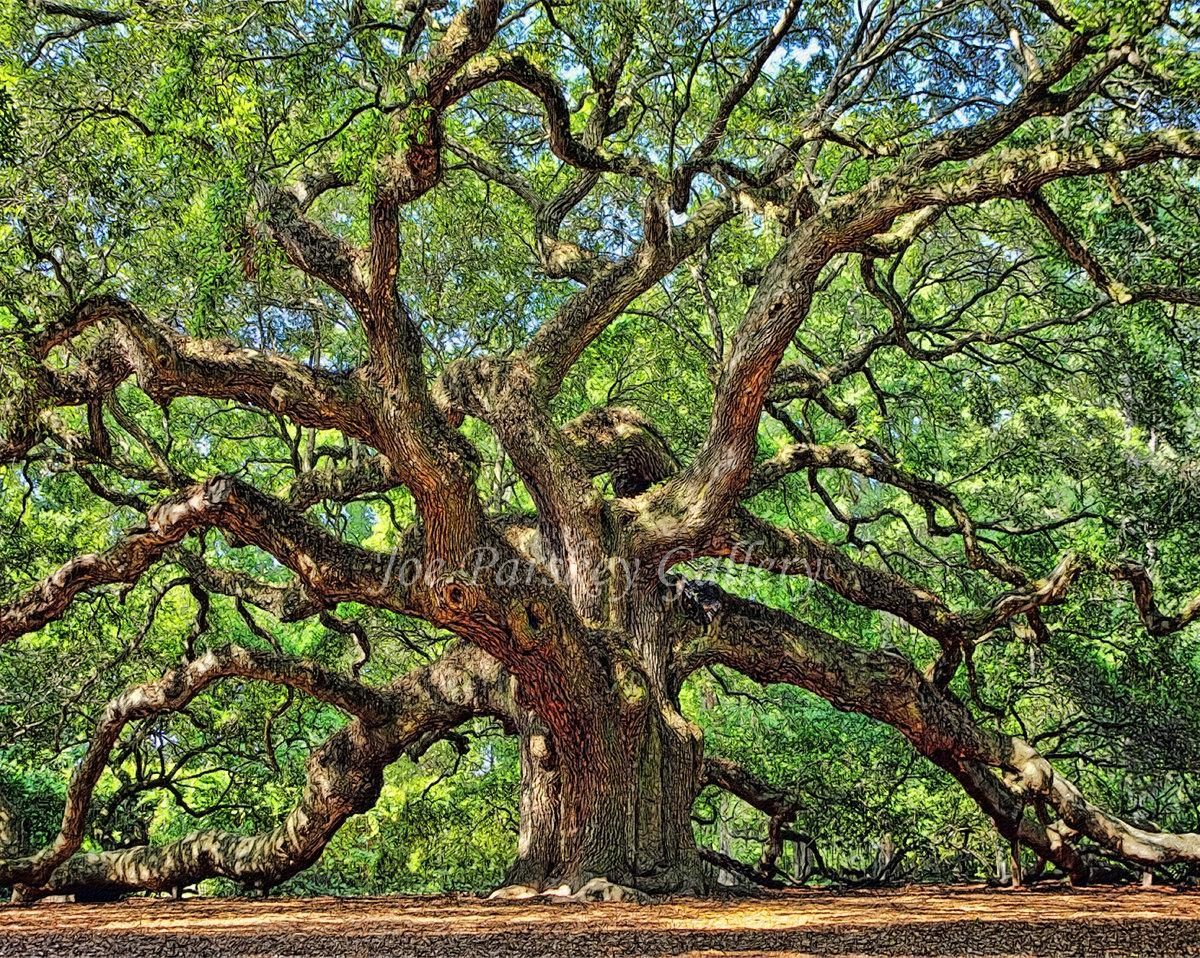 Angel Oak Johns Island Charleston South Carolina Home Intended For Live Oak Tree Wall Art (View 8 of 20)