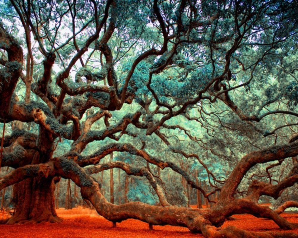 Angel Oak Throughout Live Oak Tree Wall Art (View 9 of 20)