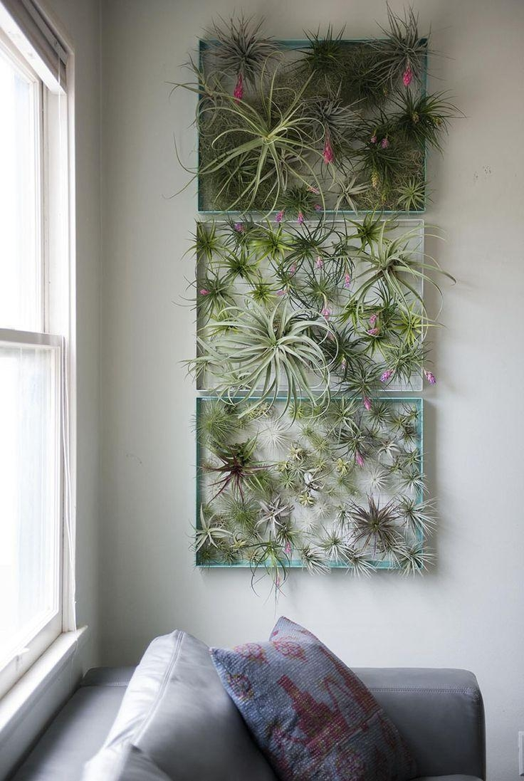Best 25+ Air Plant Display Ideas On Pinterest | Air Plants With Air Plant Wall Art (Image 4 of 20)