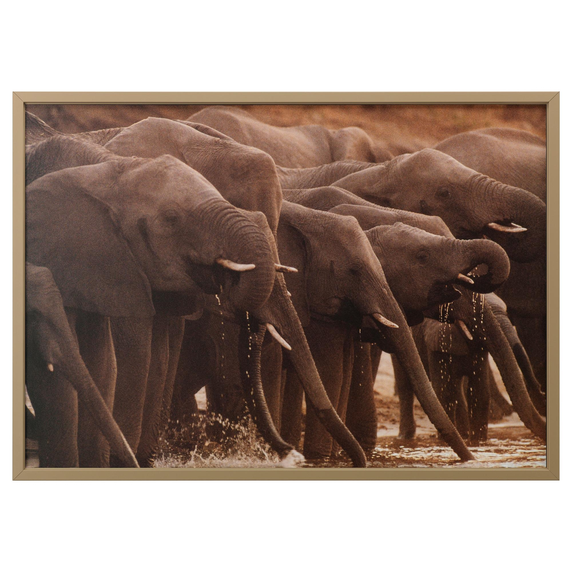 Björksta Picture With Frame African Elephants/brass Colour 140X100 With Ikea Wall Art Canvas (Image 3 of 20)