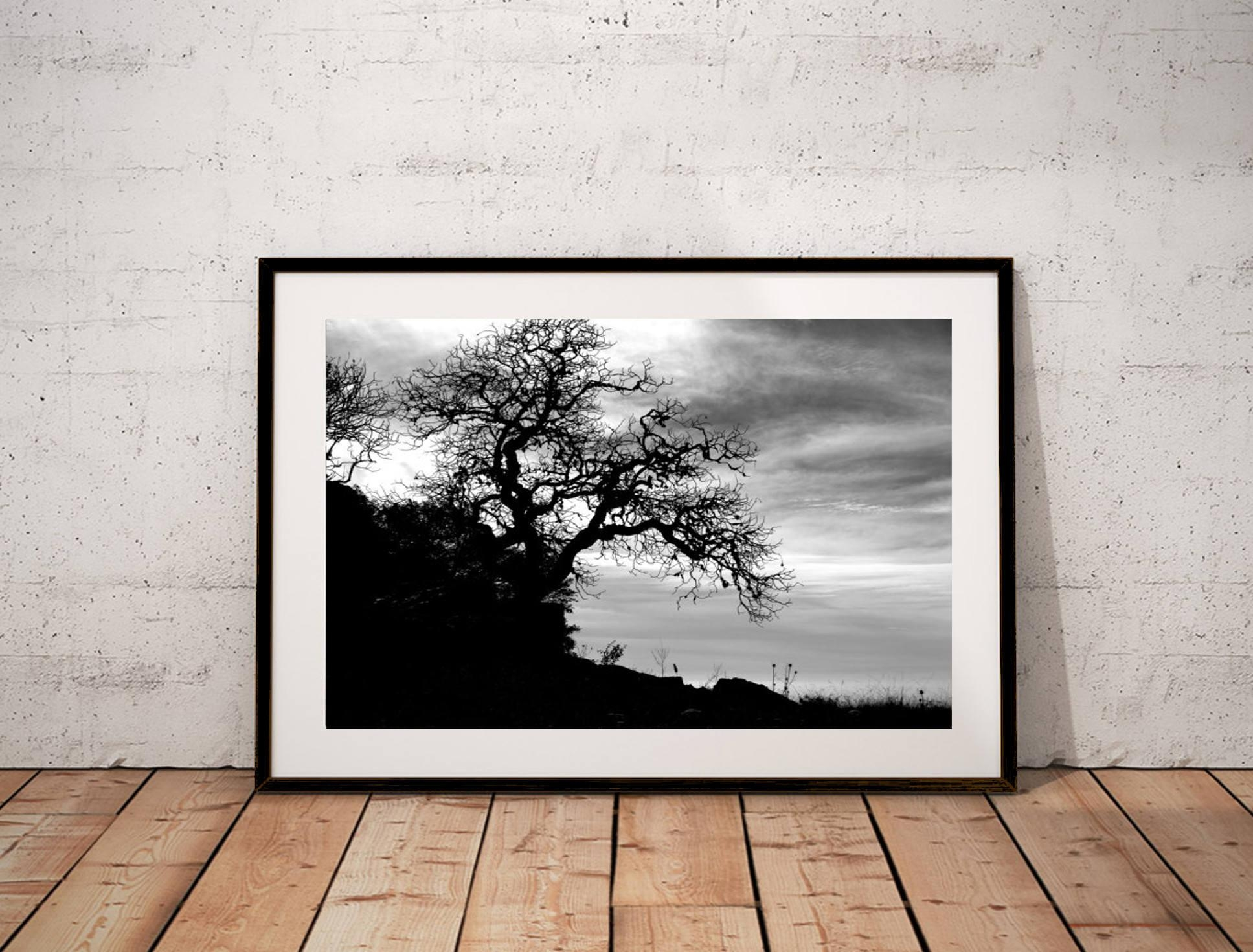 Black And White Photography Print / Nature Gnarly Tree Grassy With Live Oak Tree Wall Art (View 13 of 20)