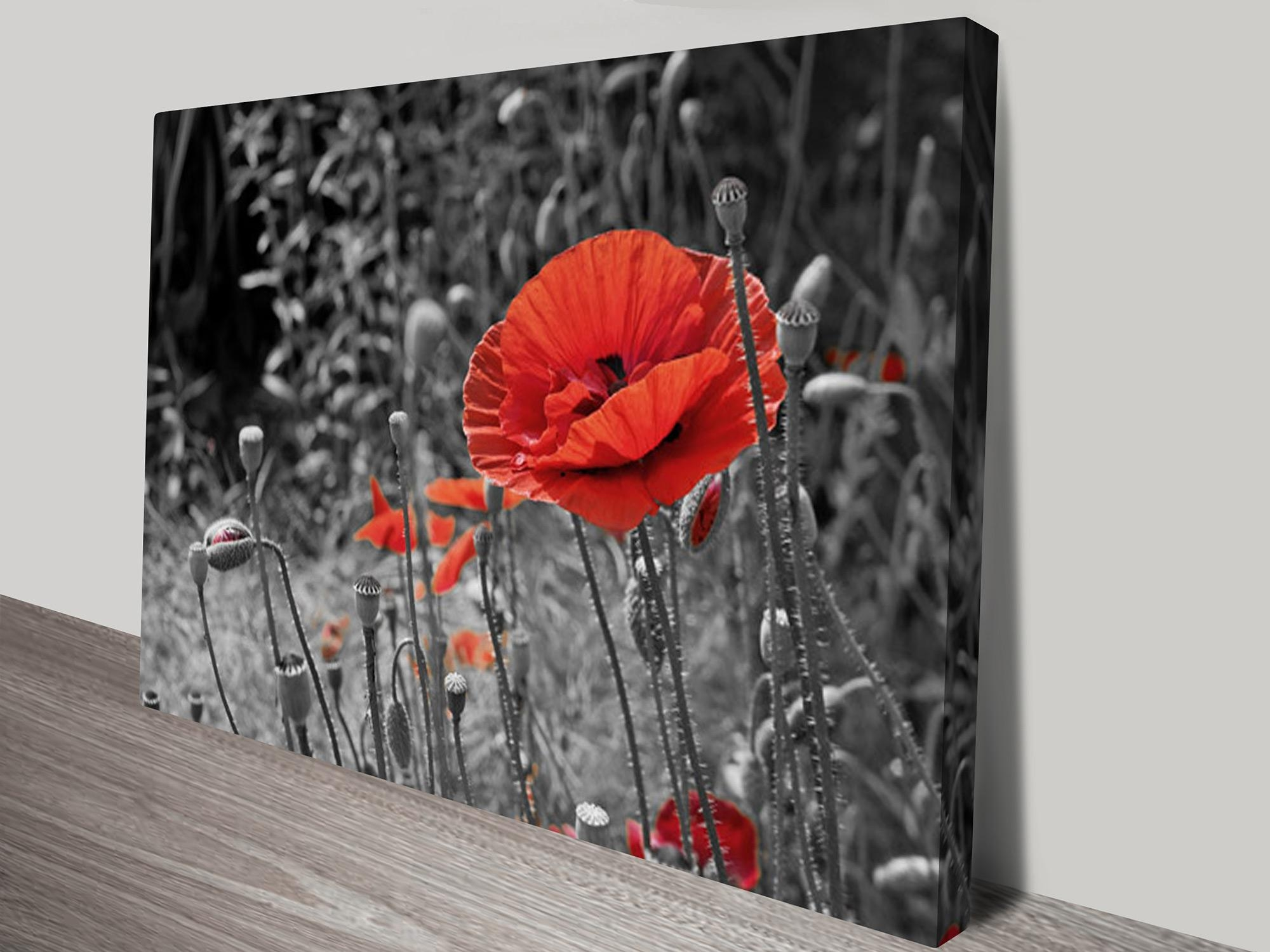 Colour Splash Canvas Prints Australia Pertaining To Red And Black Canvas Wall Art (View 19 of 20)