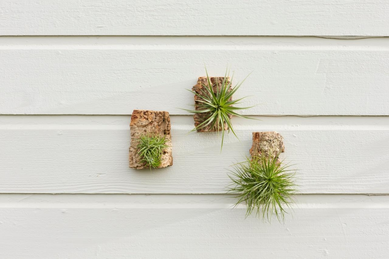 Compact Trendy Wall Air Plant Wall Decor Wall Design Plant Wall Regarding Air Plant Wall Art (Image 7 of 20)