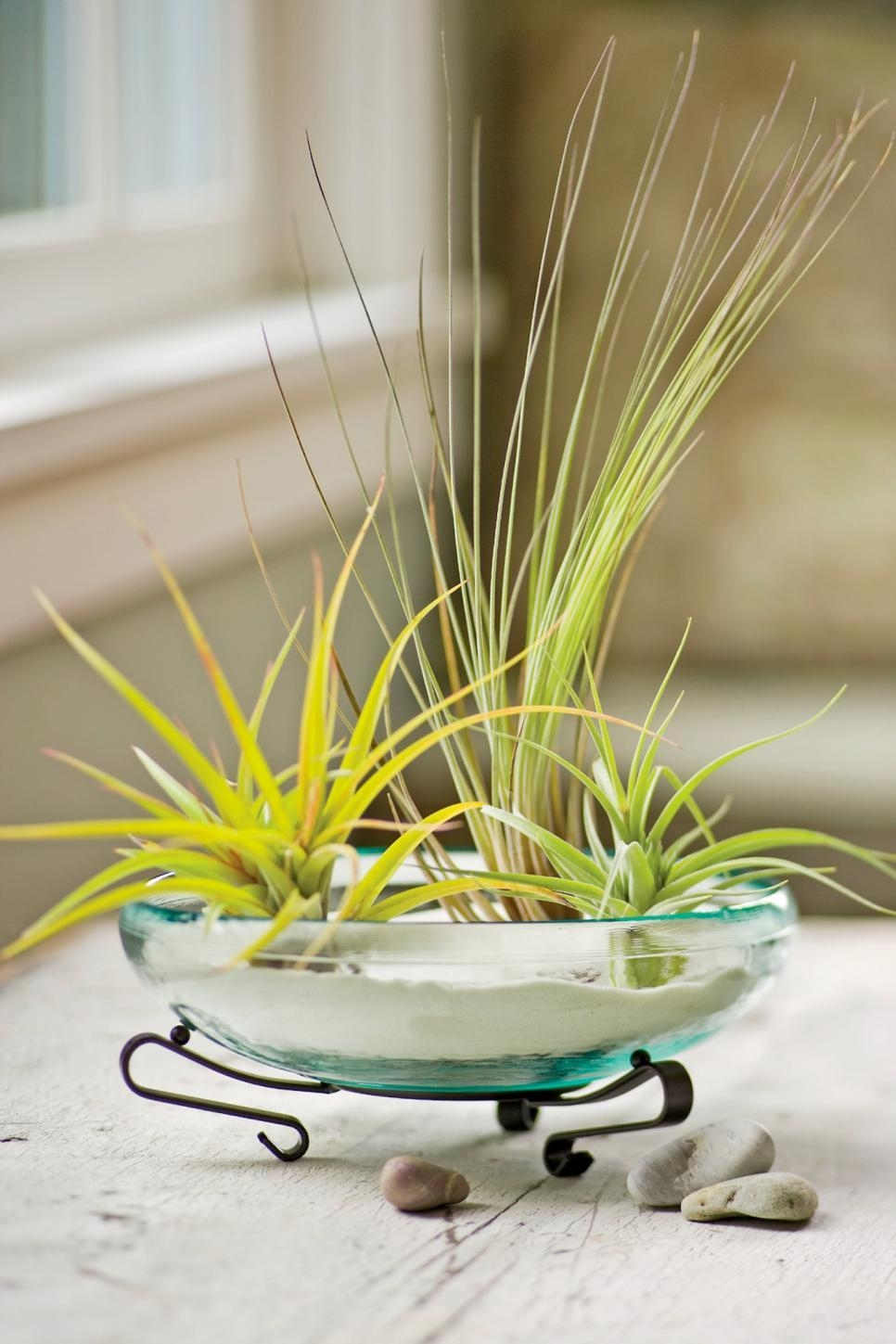 Decorating With Air Plants | Hgtv Inside Air Plant Wall Art (Image 9 of 20)