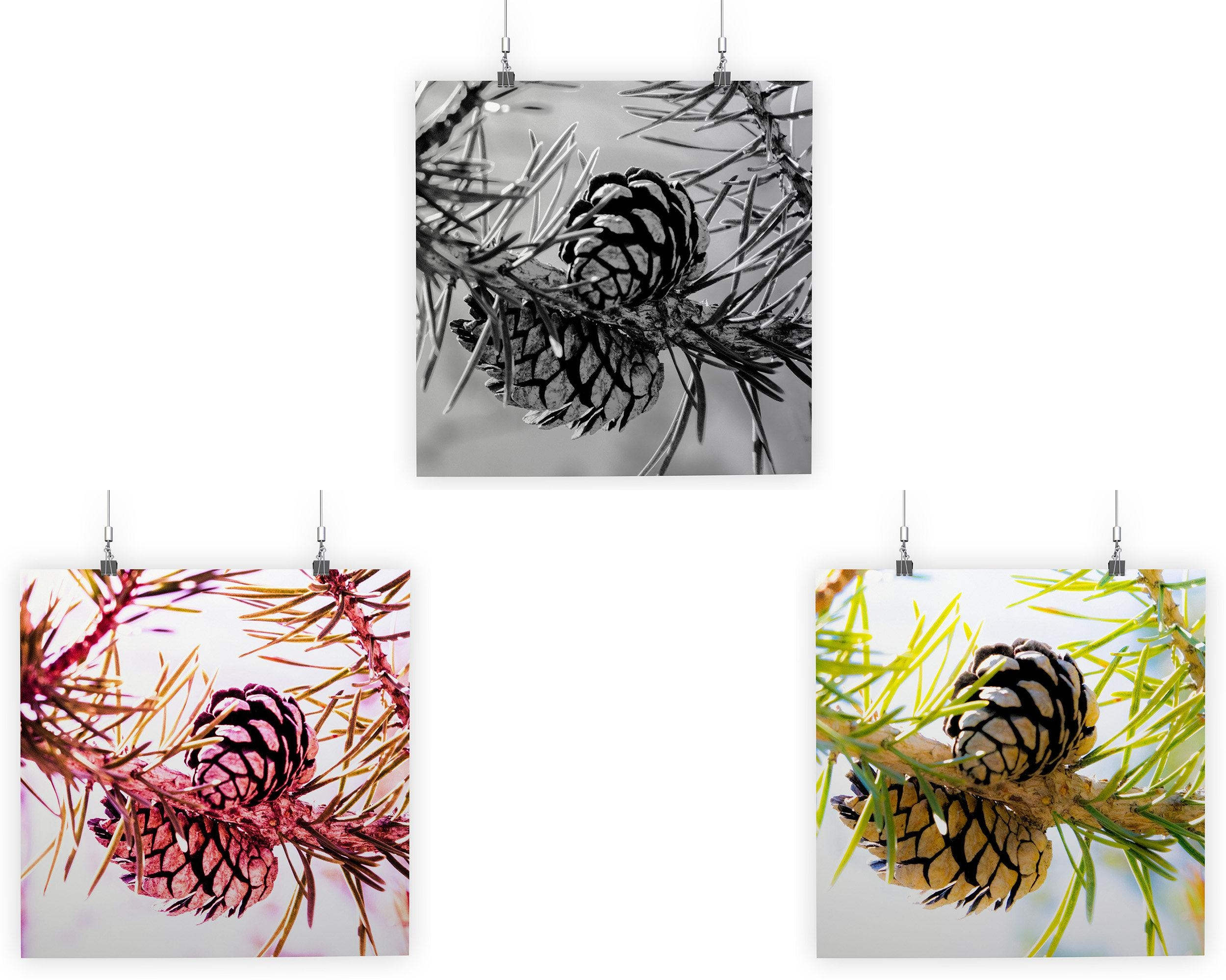 Evergreen Pine Cone Series — Green, Red, Black And White With Pine Cone Wall Art (Image 10 of 20)