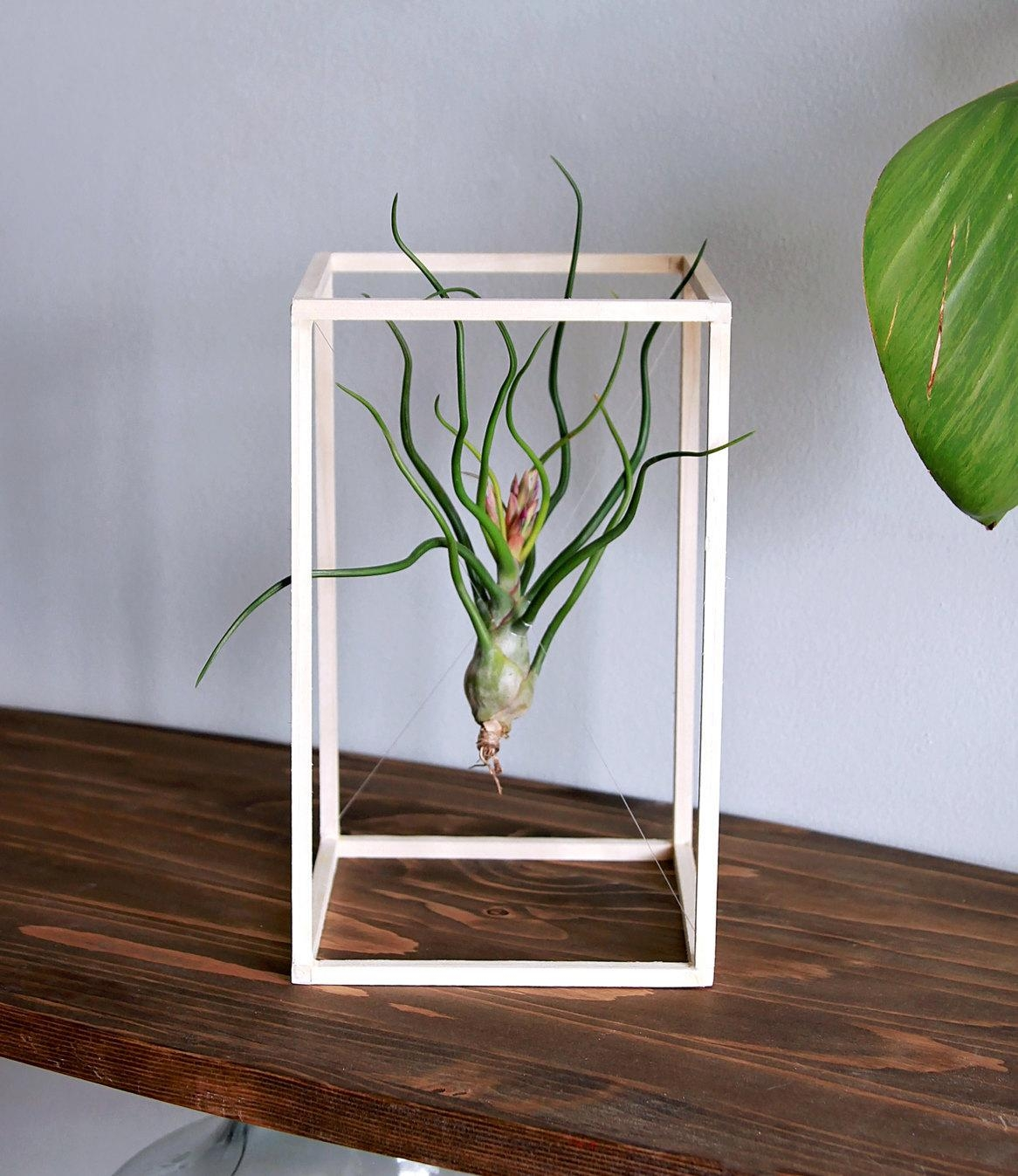 Glass Wall Pocket Aerium // Floating Wall Planter // Modern Throughout Air Plant Wall Art (View 11 of 20)