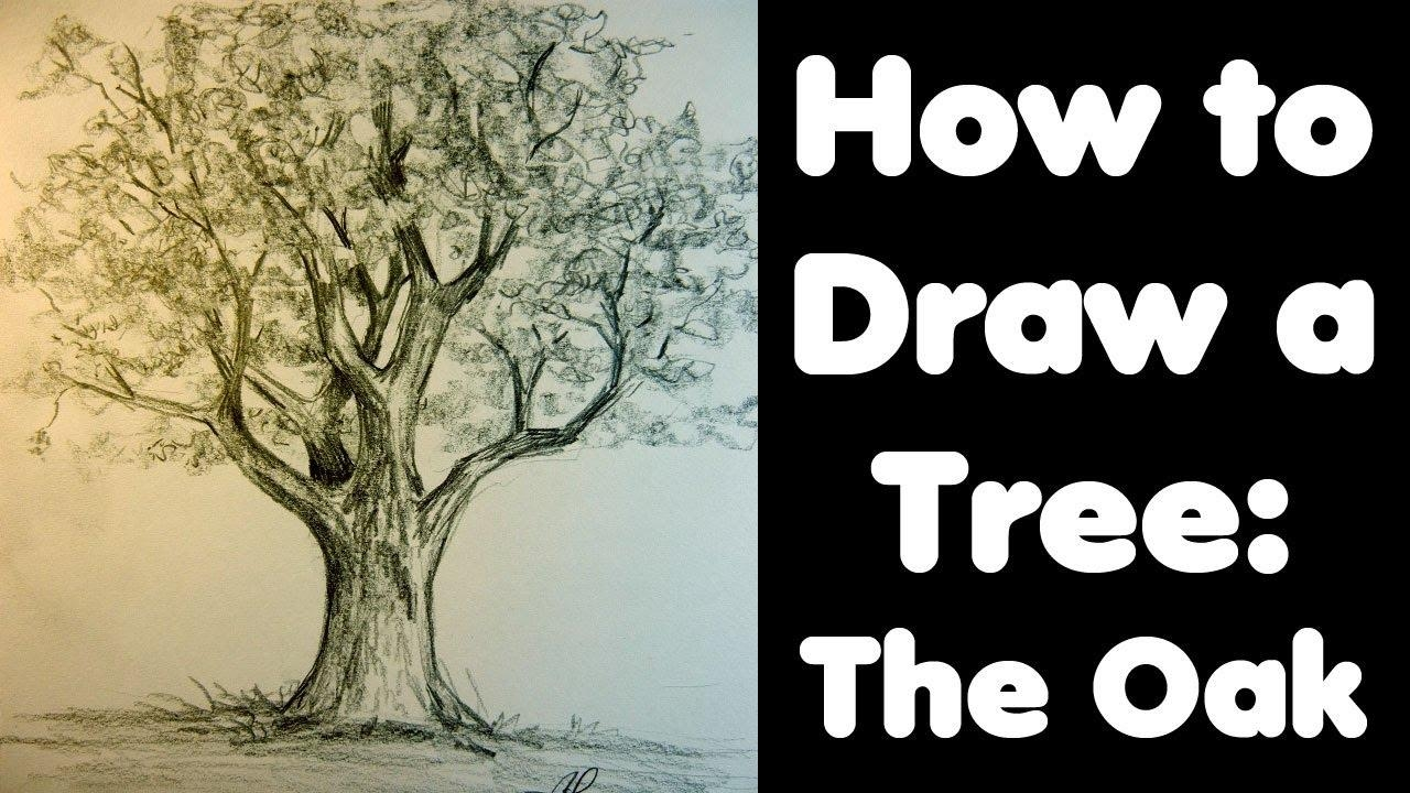 How To Draw A Tree: The Oak – Youtube With Regard To Live Oak Tree Wall Art (Image 13 of 20)