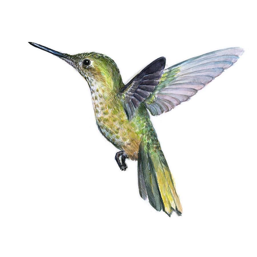 Hummingbird Watercolor Illustration Paintingolga Shvartsur Throughout Hummingbird Metal Wall Art (Image 12 of 20)