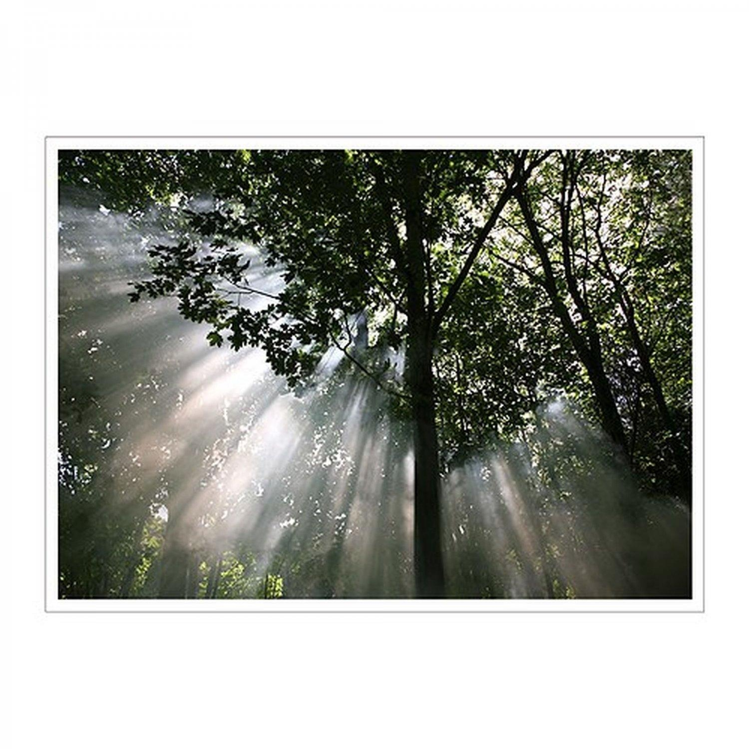 Ikea Premiar Crescendo Of Light Trees Forest Canopy Canvas Wall For Ikea Wall Art Canvas (Image 7 of 20)