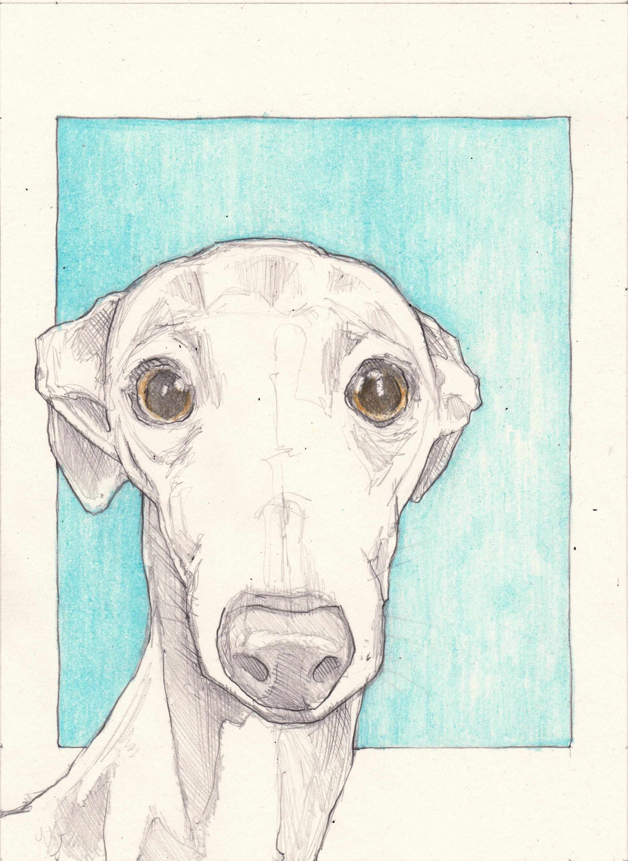Italian Greyhound Drawing An Original 7.5X (View 3 of 20)