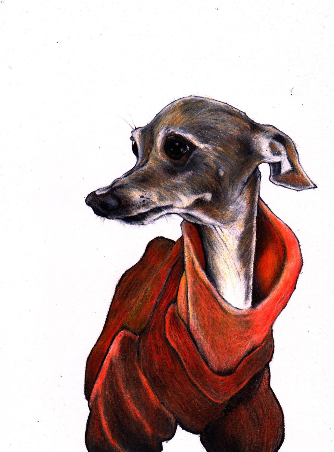 Italian Greyhound Print Iggy Art Print Signed Giclée Print Within Italian Greyhound Wall Art (View 1 of 20)