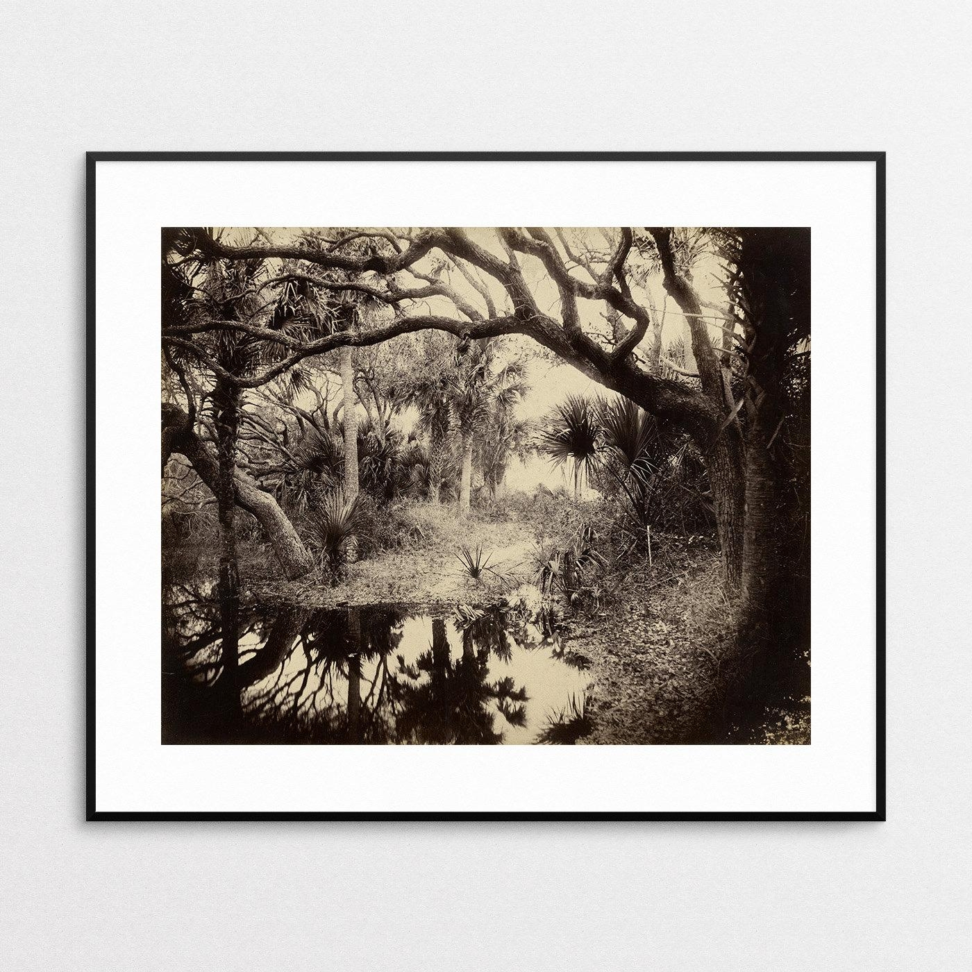 Live Oaks And Palmetto Everglades Florida 1886 Vintage For Live Oak Tree Wall Art (Image 14 of 20)