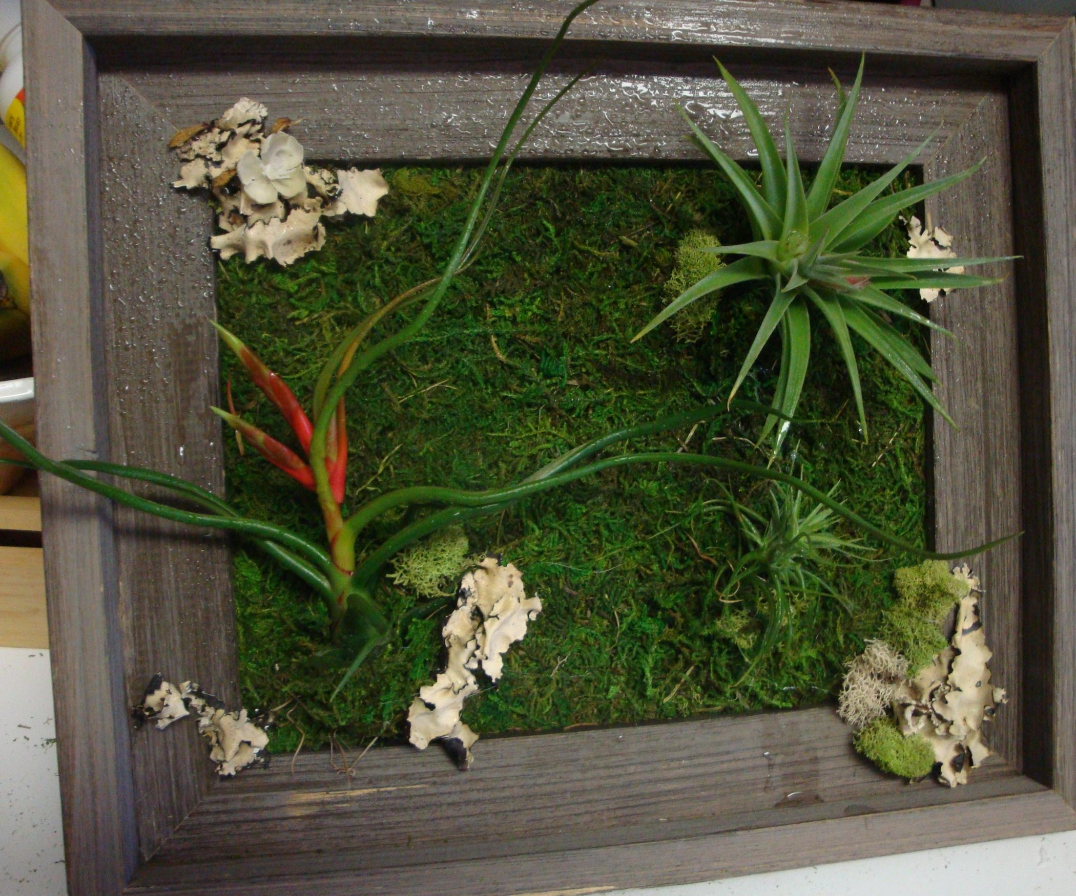 Living Wall Art: 3 Steps (With Pictures) Throughout Air Plant Wall Art (Image 15 of 20)