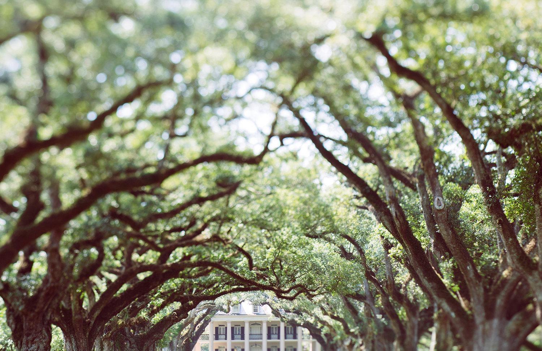 Louisiana Photography Oak Alley Plantation Oversized Wall Within Live Oak Tree Wall Art (Image 15 of 20)