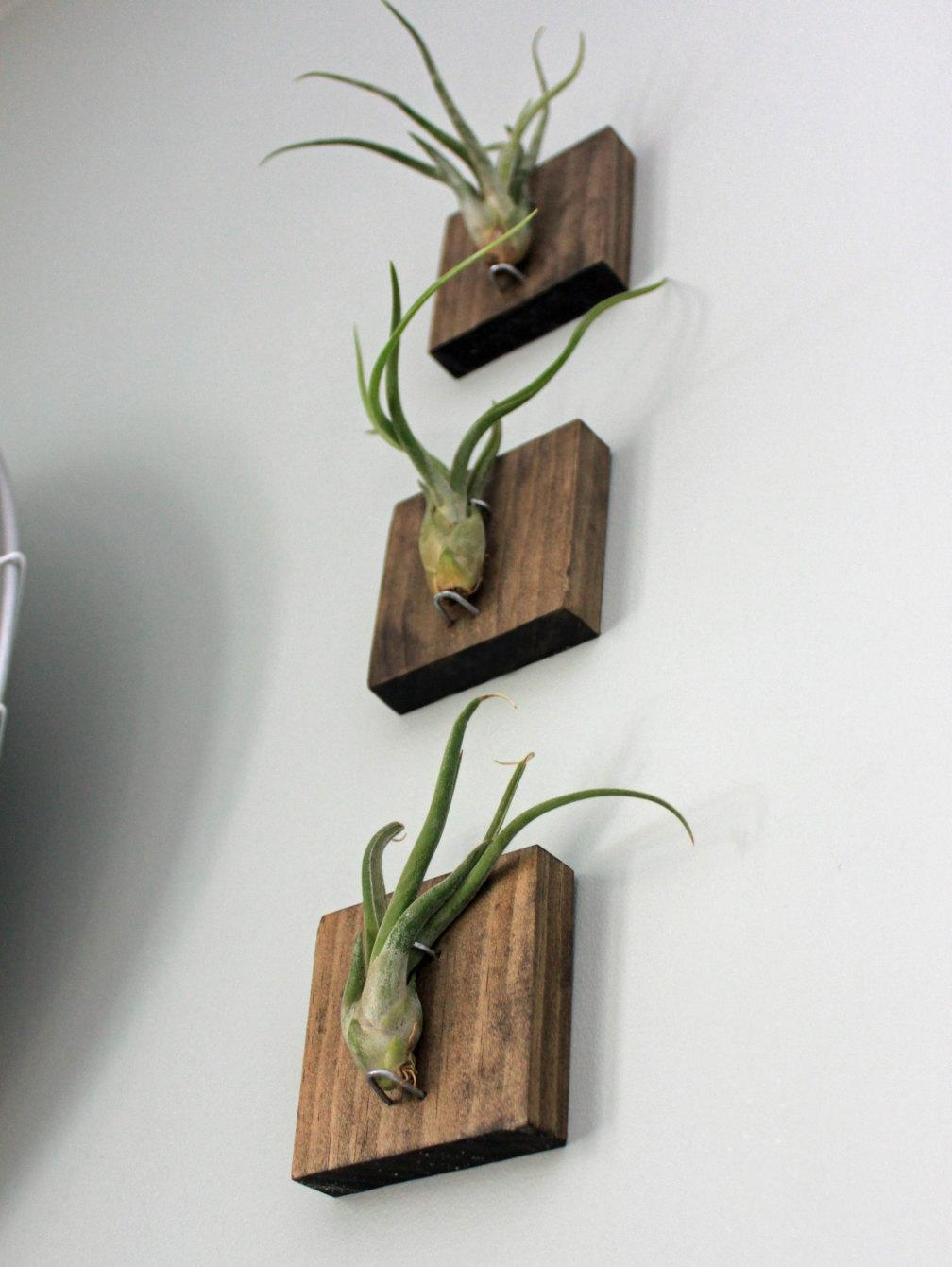 Mounted Air Plants // Medusa's Head // Living Art // Uniqe Pertaining To Air Plant Wall Art (View 5 of 20)