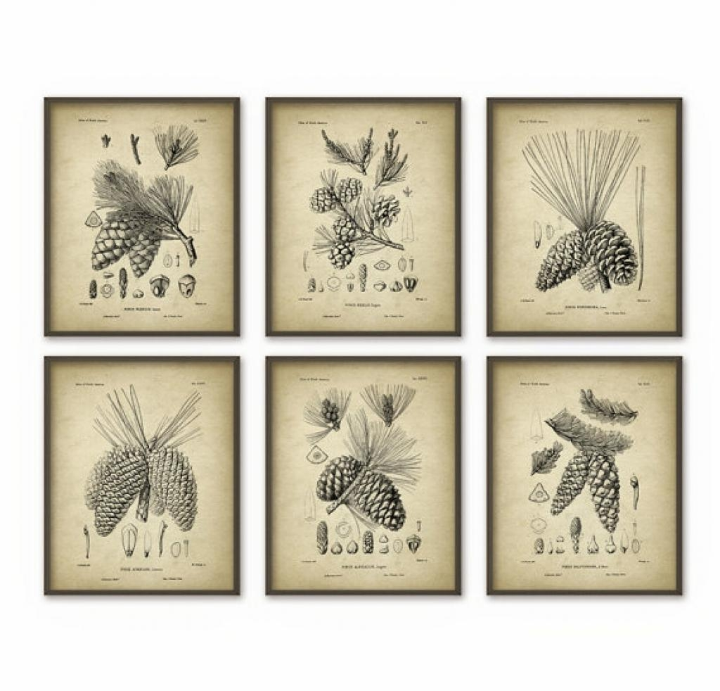 Pine Cones Wall Art Prints Set Of 6 Antique Quantumprints Pine For Pine Cone Wall Art (View 2 of 20)