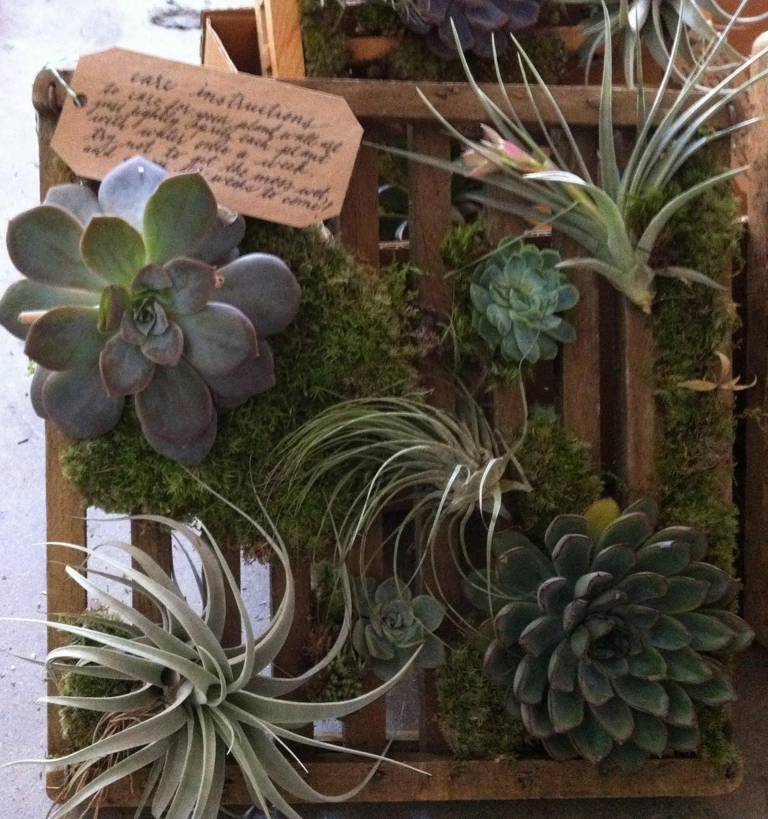 Poppies & Posies: Succulent & Air Plant Wall Art Regarding Air Plant Wall Art (Image 18 of 20)