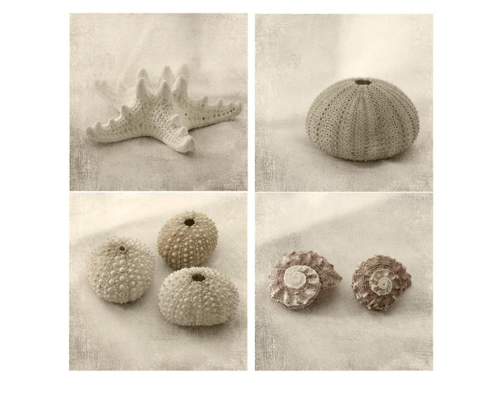 Sea Shell Photographs Beach Decor Seashell Print Set Sea Within Seashell Prints Wall Art (View 19 of 20)