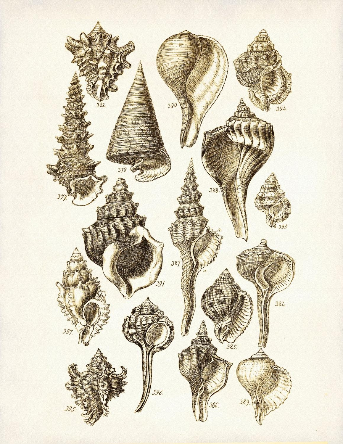 Seashells Poster Seashells Art Print George Sowerby Seashell Intended For Seashell Prints Wall Art (View 6 of 20)