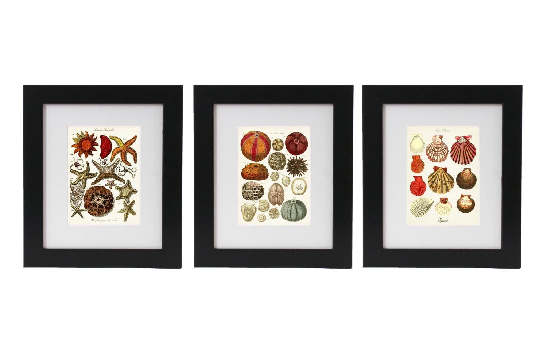 Seashells Posters Seashell Art Print Set Of 3 Nautical Wall Pertaining To Seashell Prints Wall Art (Image 17 of 20)