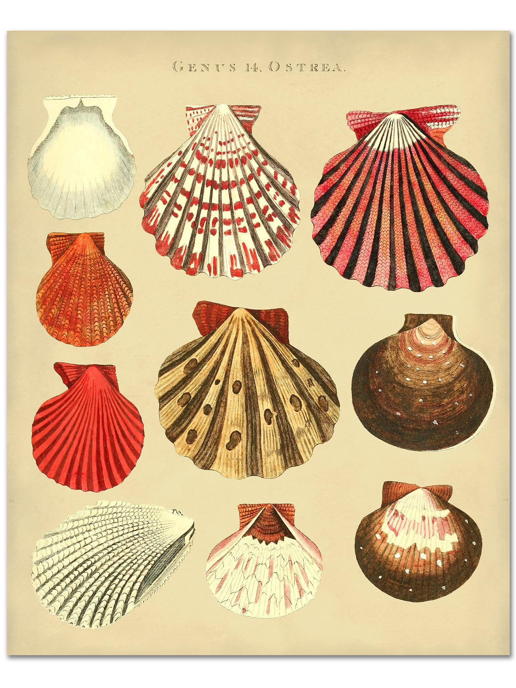 Seashells Print Of Oyster Shells Poster Beach House Wall With Regard To Seashell Prints Wall Art (View 7 of 20)