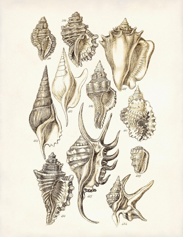 Seashells Wall Art Poster Seashells Art Print Conch Shells Intended For Seashell Prints Wall Art (Image 19 of 20)