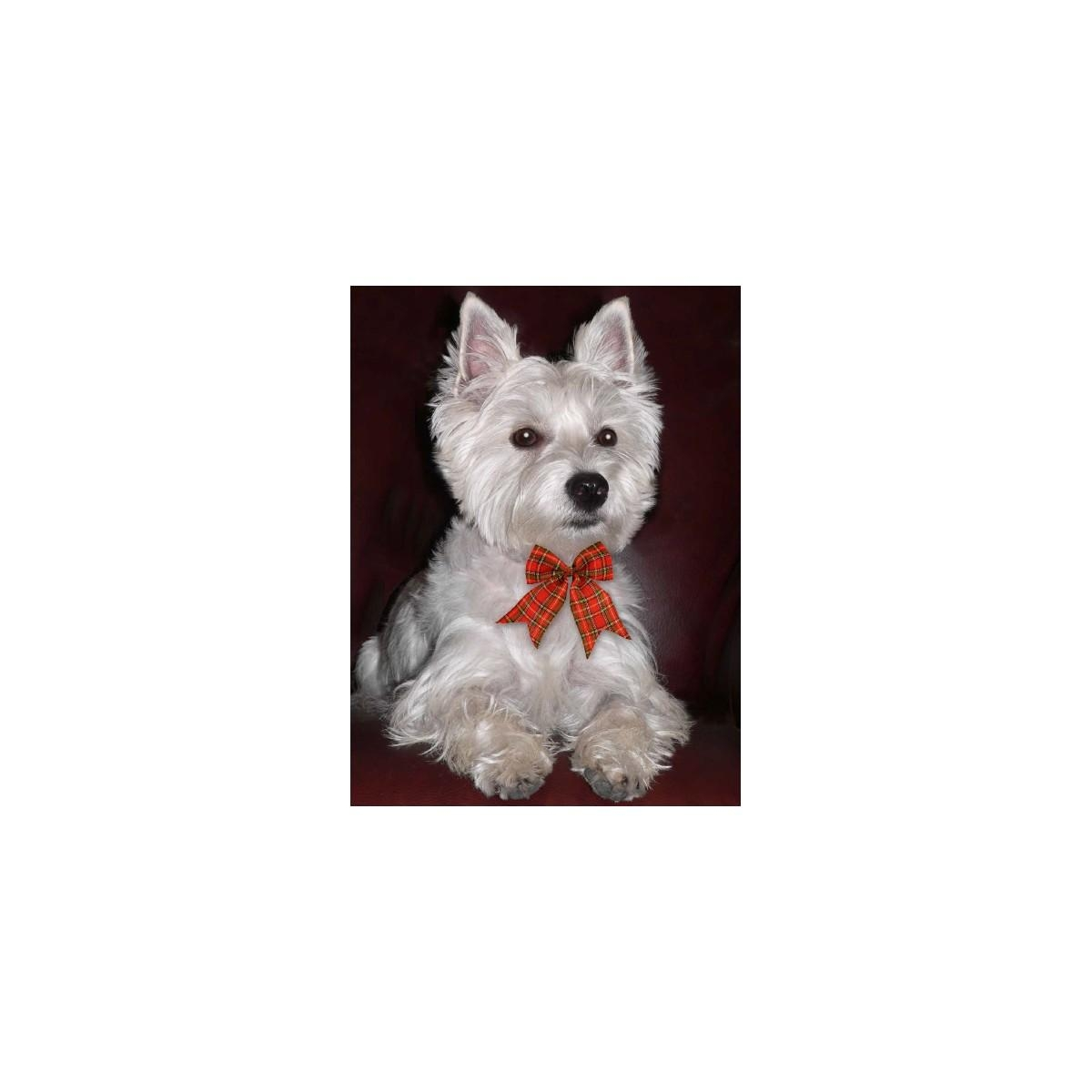 Tartan Bow Westie Picture 3D Westie Wall Art With Westie Wall Art (View 4 of 20)