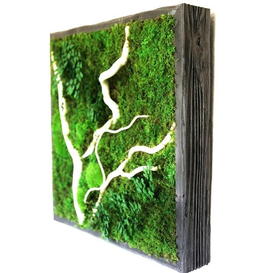 Wall Ideas : Succulent Living Wall Art Heres Succulent Plant Wall Inside Air Plant Wall Art (View 10 of 20)