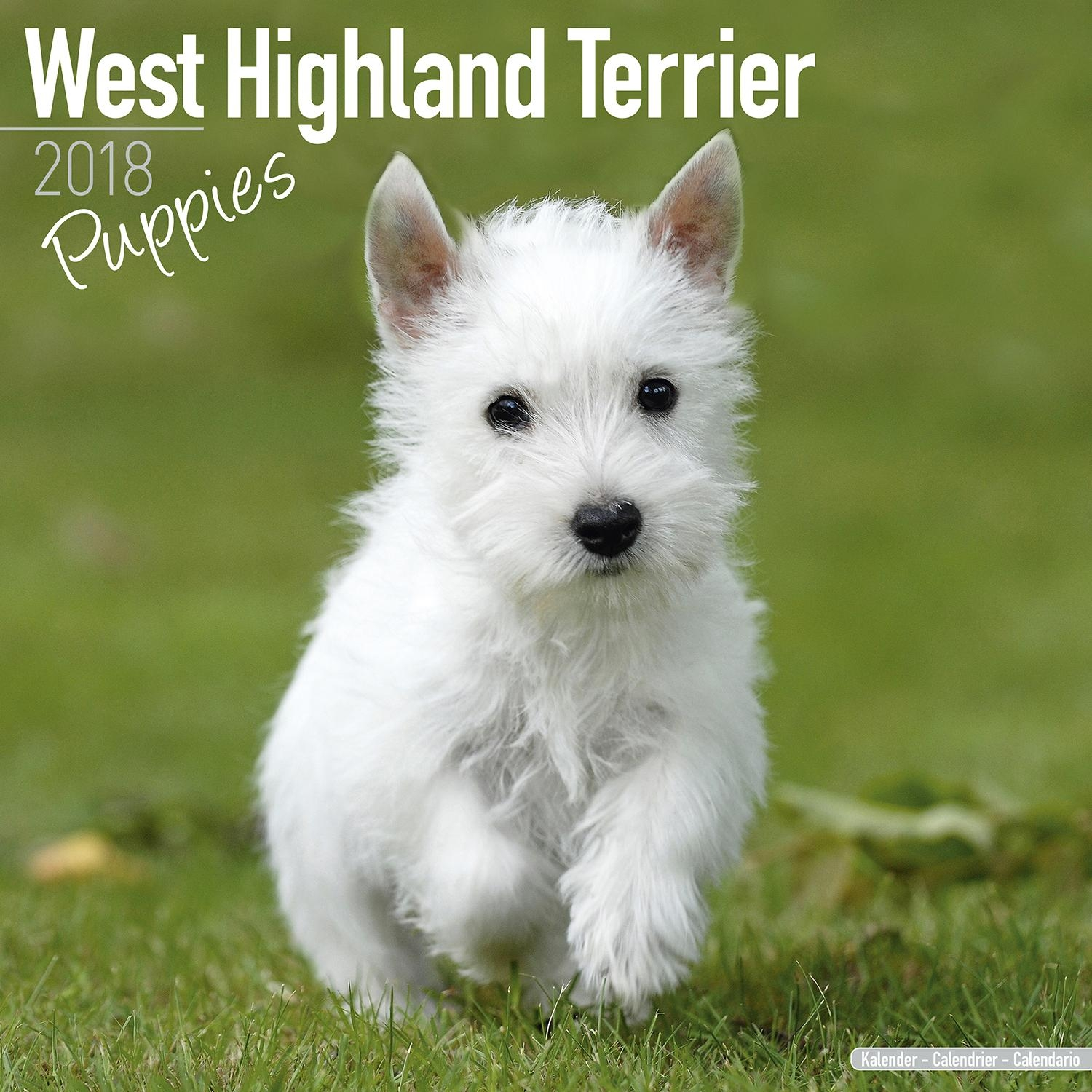 West Highland Terrier Puppies Calendar 2018 | Pet Prints Inc (View 10 of 20)