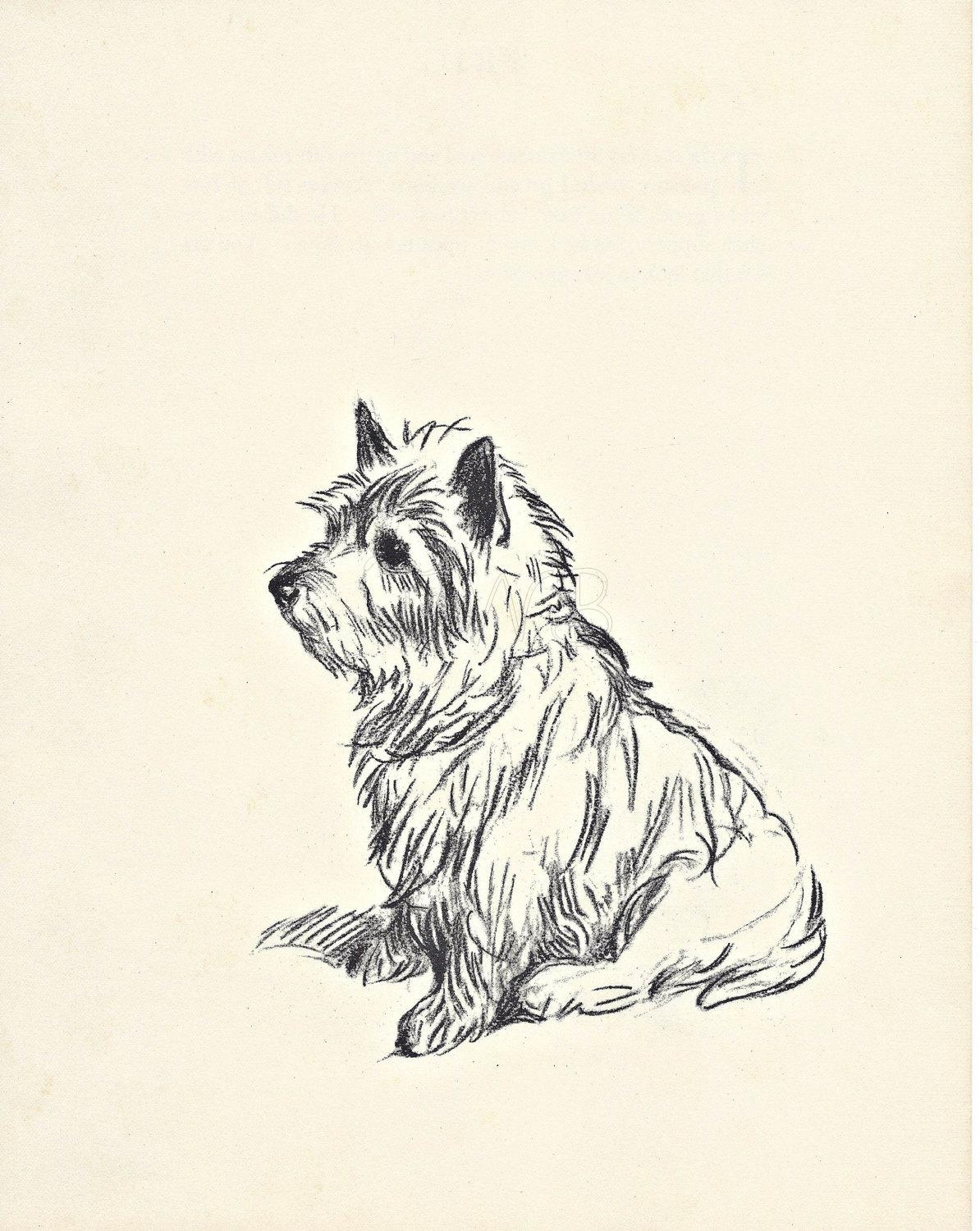 Westie 1930S Dog Print Terrier Print Pet Art Illustration Throughout Westie Wall Art (View 9 of 20)