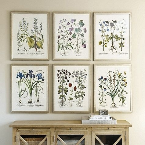 56 Best Botanical Frame's Images On Pinterest | Botanical Prints Throughout Framed Botanical Art Prints (Image 1 of 15)