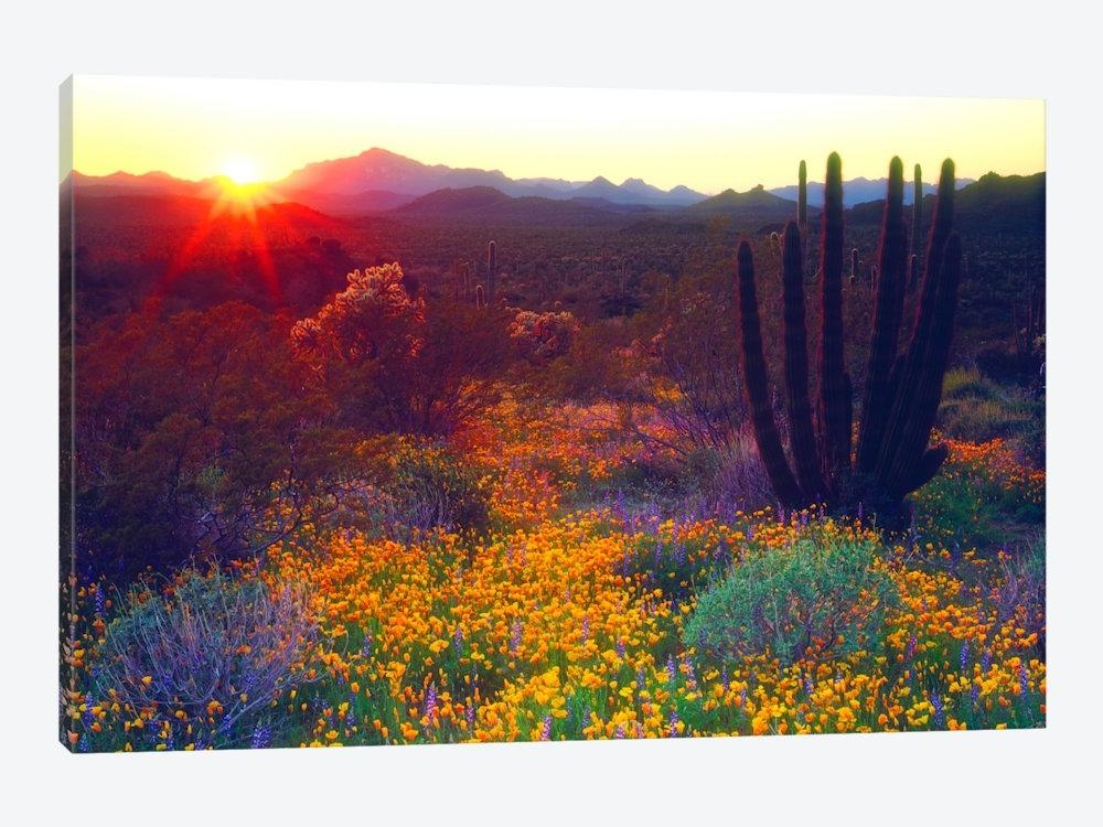 Arizona Canvas Wall Art — Icanvas With Regard To Arizona Canvas Wall Art (View 8 of 15)