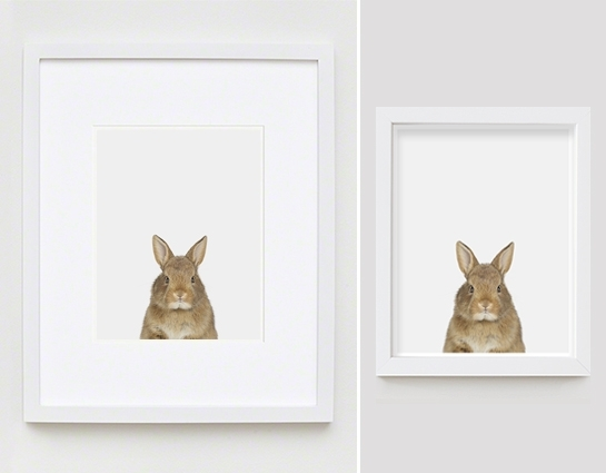 Baby Bunny Little Darling – The Animal Print Shopsharon Montrose Intended For Framed Animal Art Prints (View 3 of 15)