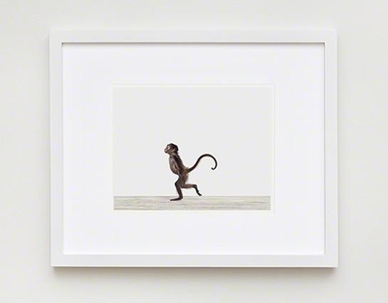 Baby Monkey No (Image 6 of 15)
