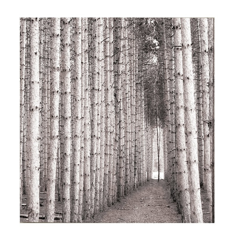 Birch Trees Canvas Print Within Jysk Canvas Wall Art (View 12 of 15)