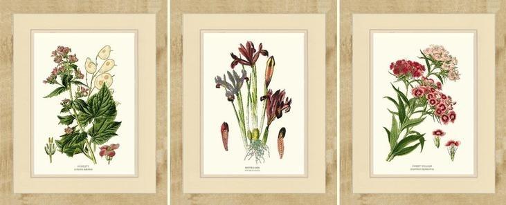 Bird Prints For Framing Honesty Netted Iris And Sweet William In Birds Framed Art Prints (Image 7 of 15)