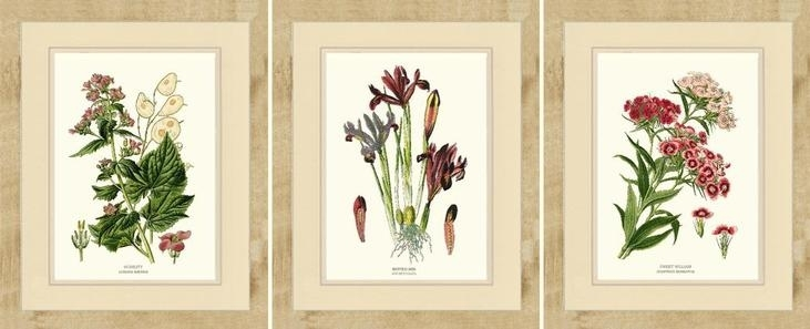 Bird Prints For Framing Honesty Netted Iris And Sweet William Pertaining To Framed Botanical Art Prints (View 3 of 15)