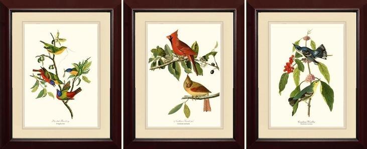Featured Image of Birds Framed Art Prints