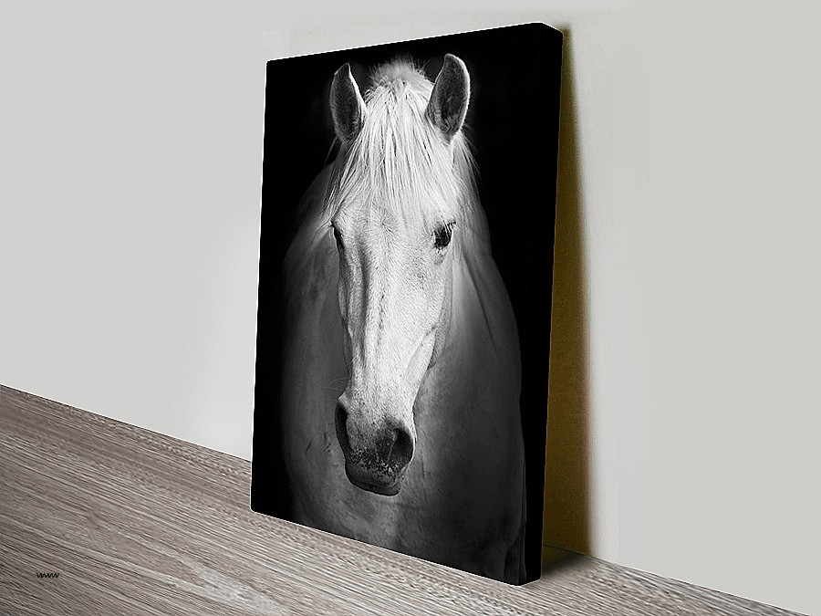 Cheap Black And White Wall Art Inspirational White Horse Black And Within Canvas Wall Art Of Perth (View 17 of 18)