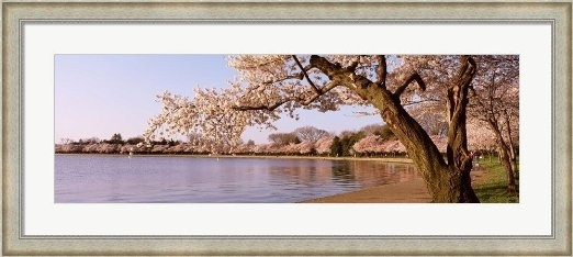 Cheap Cherry Tree Wall Art, Find Cherry Tree Wall Art Deals On Pertaining To Washington Dc Framed Art Prints (View 7 of 15)