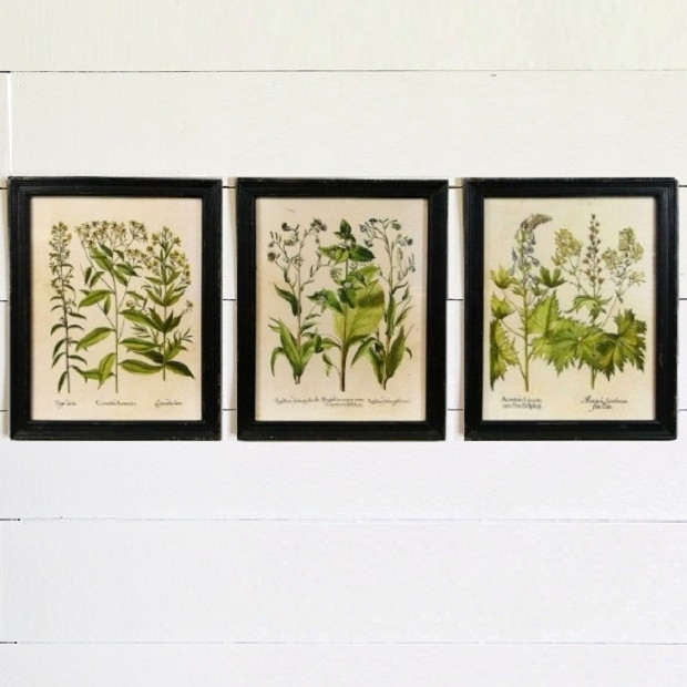 Colorful Framed Botanical Art Prints, Set Of 3 | Antique Farmhouse Intended For Framed Botanical Art Prints (Image 5 of 15)