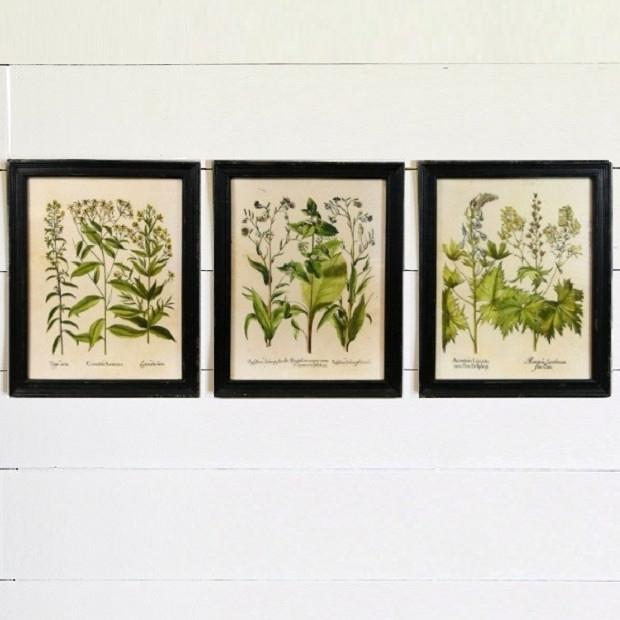 Colorful Framed Botanical Art Prints, Set Of 3 | Antique Farmhouse Intended For Framed Botanical Art Prints (View 6 of 15)
