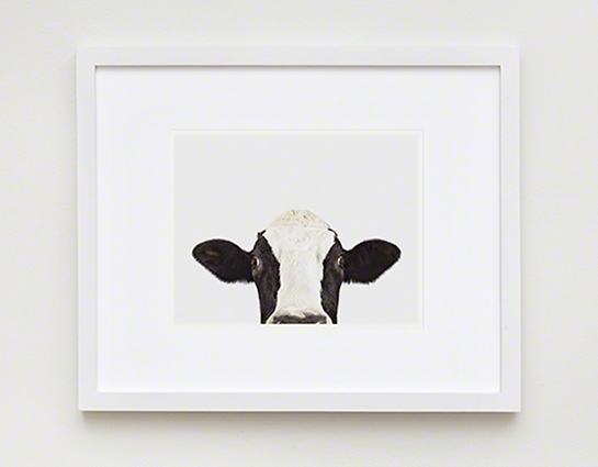 Cow: Pictures Of Farm Animals: The Animal Print Shop | Sharon Regarding Framed Animal Art Prints (Image 7 of 15)