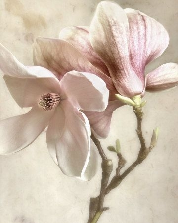 Decorate Your Wall With This Beautiful 'pink Magnolia Ii' Piece Of For Flowers Framed Art Prints (Image 5 of 15)