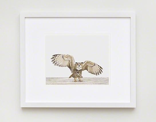Eagle Owl No (Image 8 of 15)