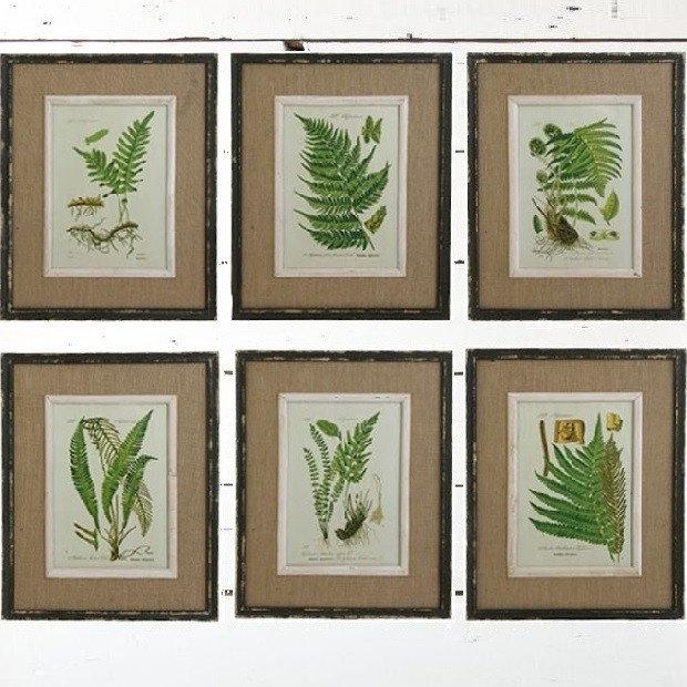 Fern Botanical Prints Framed Wall Art, Set Of 6 | Antique Farmhouse With Regard To Framed Botanical Art Prints (View 10 of 15)