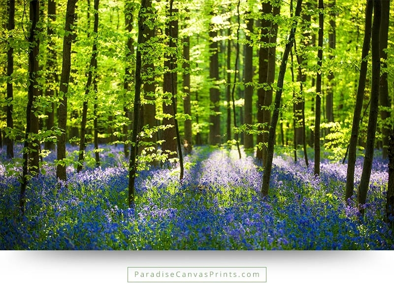 Forest Wildflowers With Bright Sunlight – Wall Art, Canvas Print Within Landscape Canvas Wall Art (View 9 of 15)